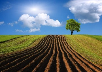 Цель использования земельного участка: допустимые решения