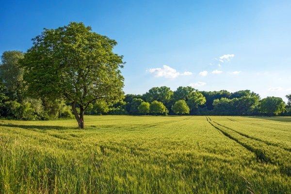 Пахотные земли ¬- это ценный земельный ресурс страны